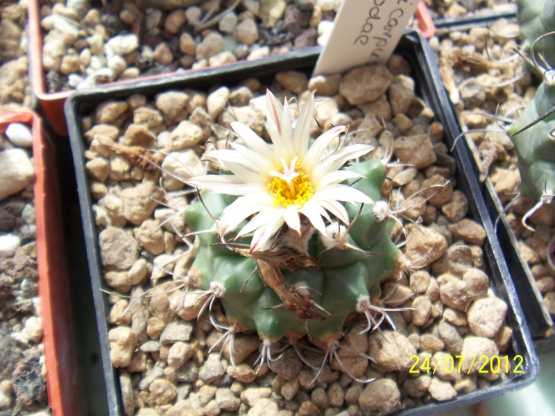 Cacti and Sukkulent in Köln, every day new flowers in the greenhouse Part 14  Bild_340