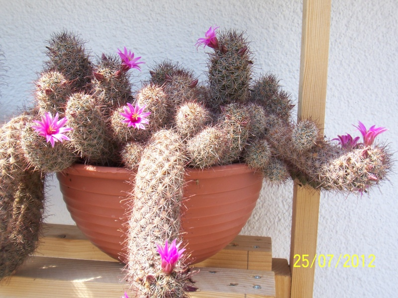 Cacti and Sukkulent in Köln, every day new flowers in the greenhouse Part 15   Bild_341