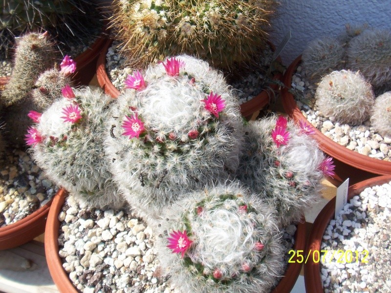 Cacti and Sukkulent in Köln, every day new flowers in the greenhouse Part 15   Bild_342