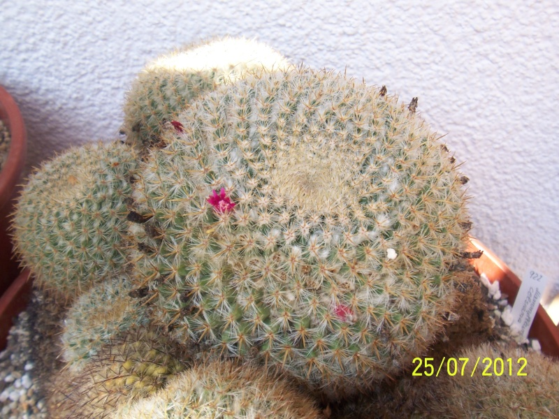 Cacti and Sukkulent in Köln, every day new flowers in the greenhouse Part 15   Bild_343