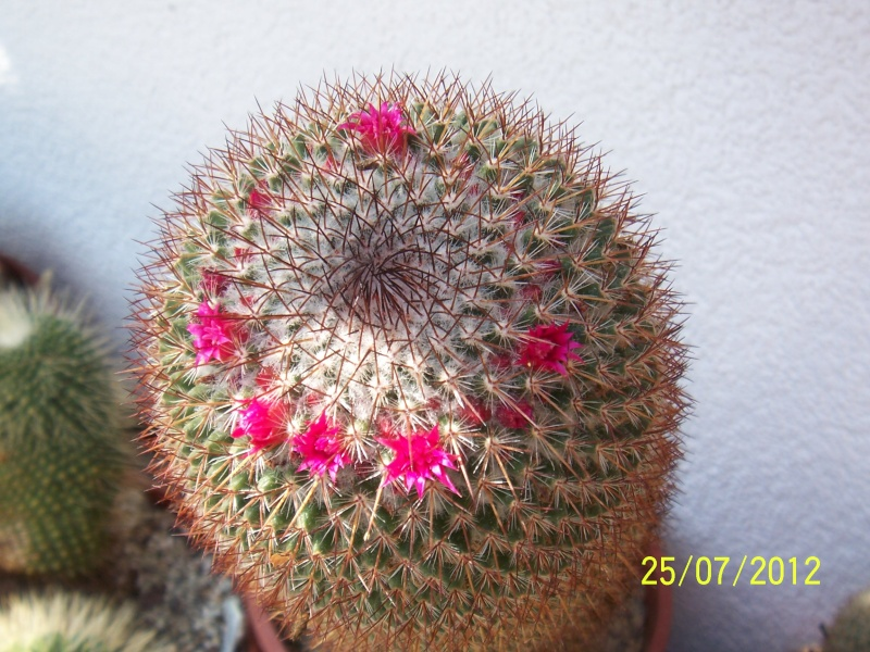 Cacti and Sukkulent in Köln, every day new flowers in the greenhouse Part 15   Bild_344