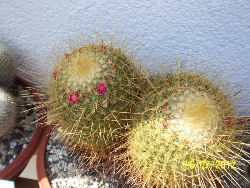 Cacti and Sukkulent in Köln, every day new flowers in the greenhouse Part 15   Bild_347