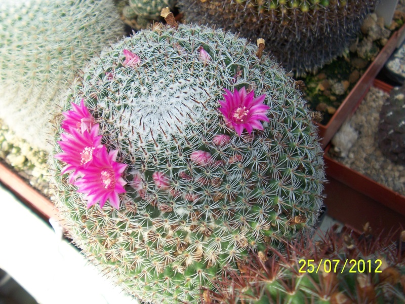 Cacti and Sukkulent in Köln, every day new flowers in the greenhouse Part 15   Bild_351