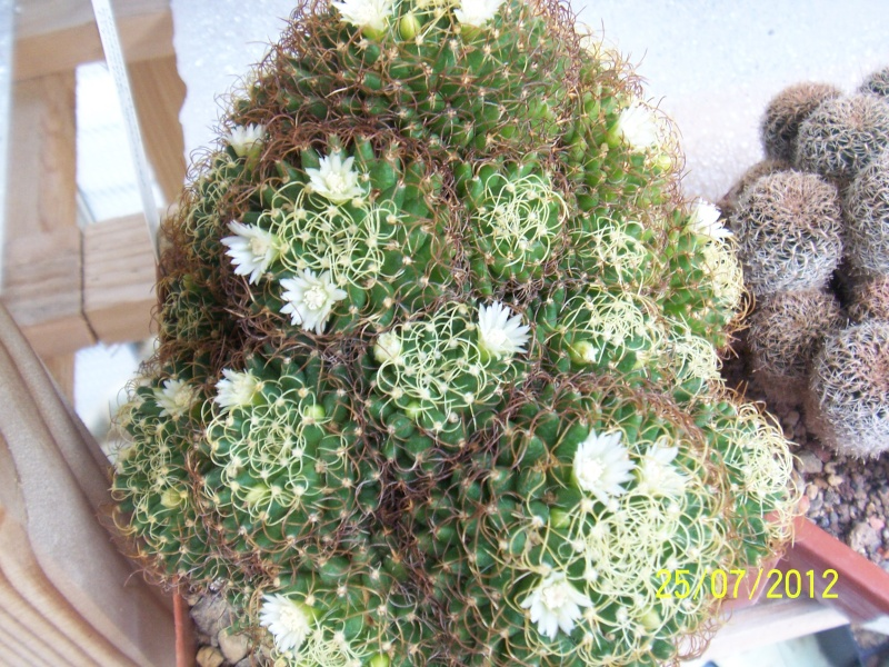 Cacti and Sukkulent in Köln, every day new flowers in the greenhouse Part 15   Bild_355