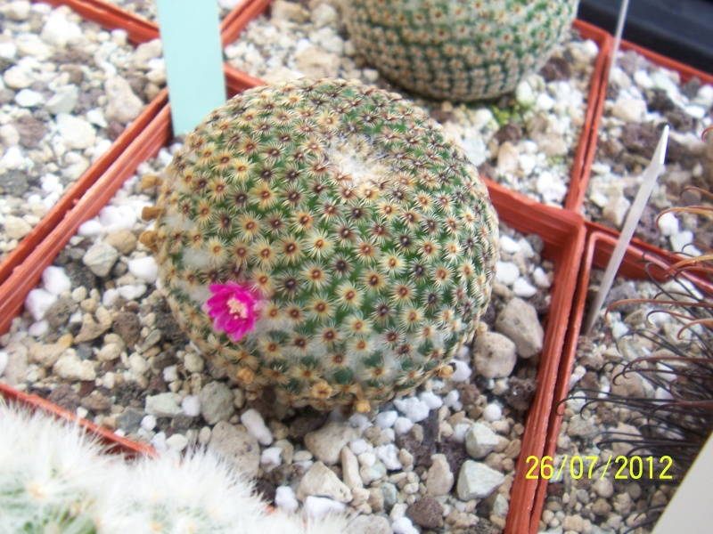 Cacti and Sukkulent in Köln, every day new flowers in the greenhouse Part 16   Bild_369