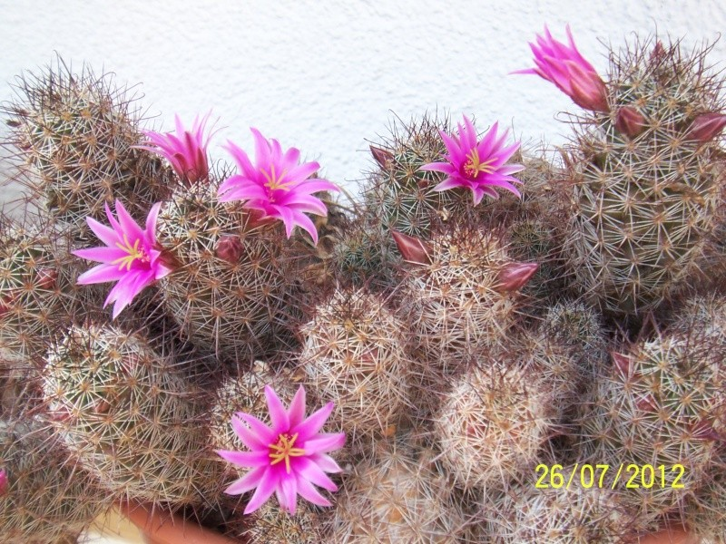 Cacti and Sukkulent in Köln, every day new flowers in the greenhouse Part 16   Bild_371
