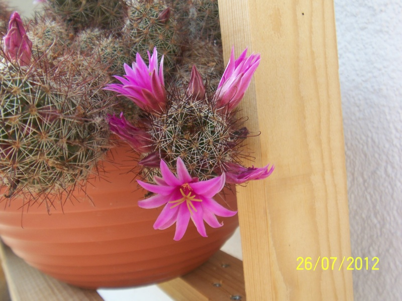 Cacti and Sukkulent in Köln, every day new flowers in the greenhouse Part 16   Bild_373