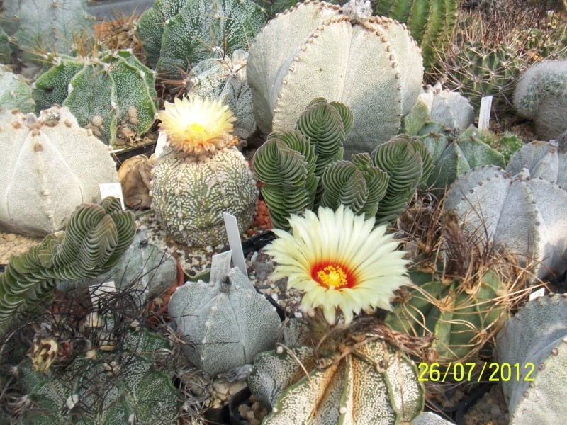 Cacti and Sukkulent in Köln, every day new flowers in the greenhouse Part 16   Bild_376