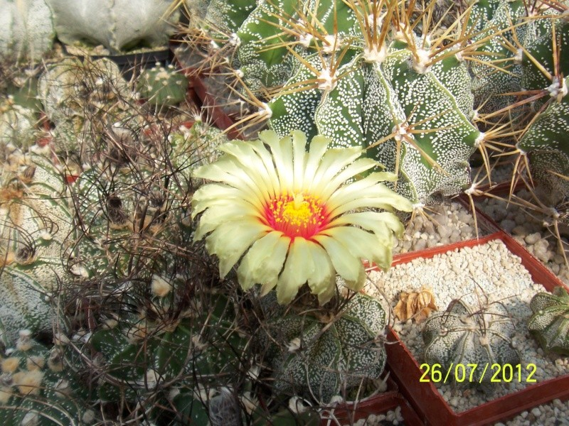 Cacti and Sukkulent in Köln, every day new flowers in the greenhouse Part 16   Bild_377