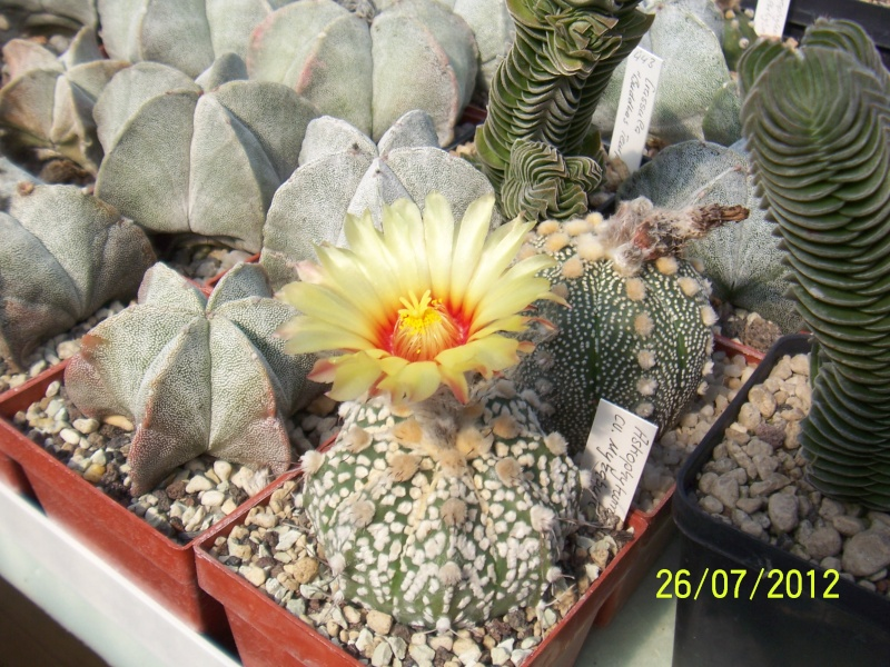Cacti and Sukkulent in Köln, every day new flowers in the greenhouse Part 16   Bild_378
