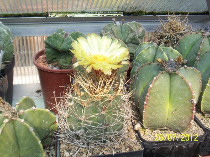 Cacti and Sukkulent in Köln, every day new flowers in the greenhouse Part 16   Bild_379