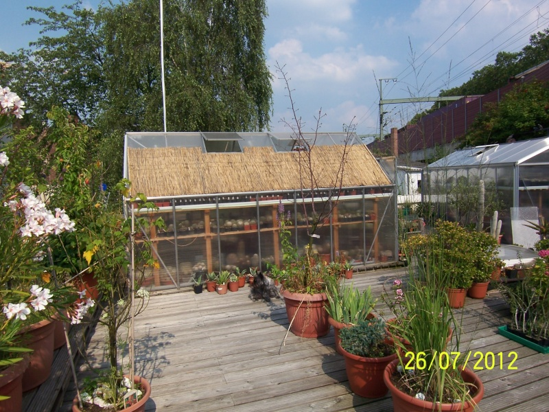 Cacti and Sukkulent in Köln, every day new flowers in the greenhouse Part 16   Bild_381
