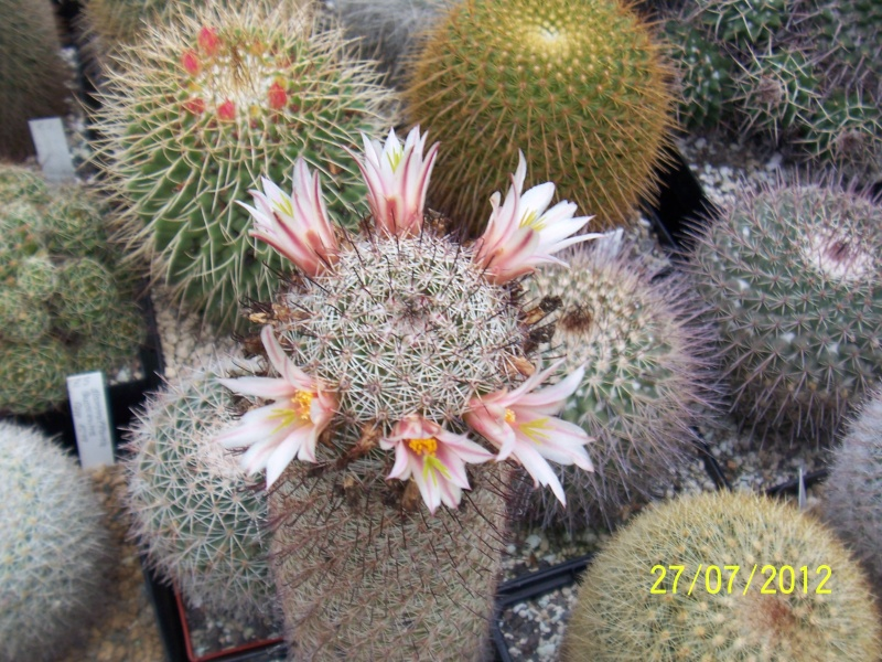 Cacti and Sukkulent in Köln, every day new flowers in the greenhouse Part 16   Bild_384
