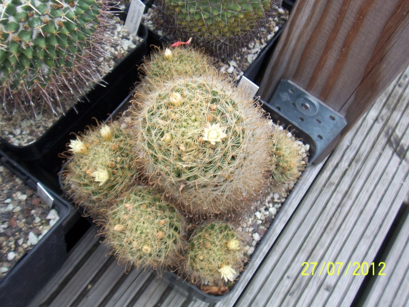 Cacti and Sukkulent in Köln, every day new flowers in the greenhouse Part 16   Bild_385