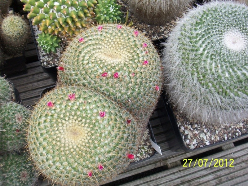 Cacti and Sukkulent in Köln, every day new flowers in the greenhouse Part 16   Bild_387