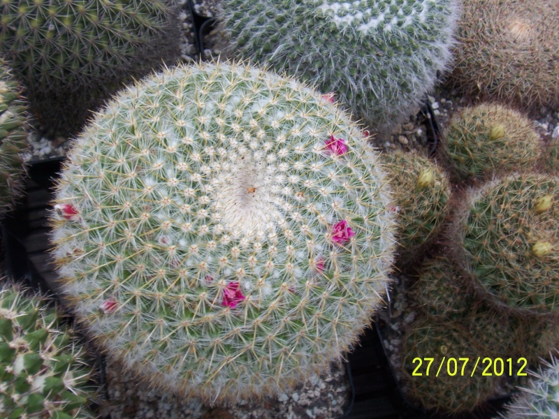 Cacti and Sukkulent in Köln, every day new flowers in the greenhouse Part 16   Bild_388
