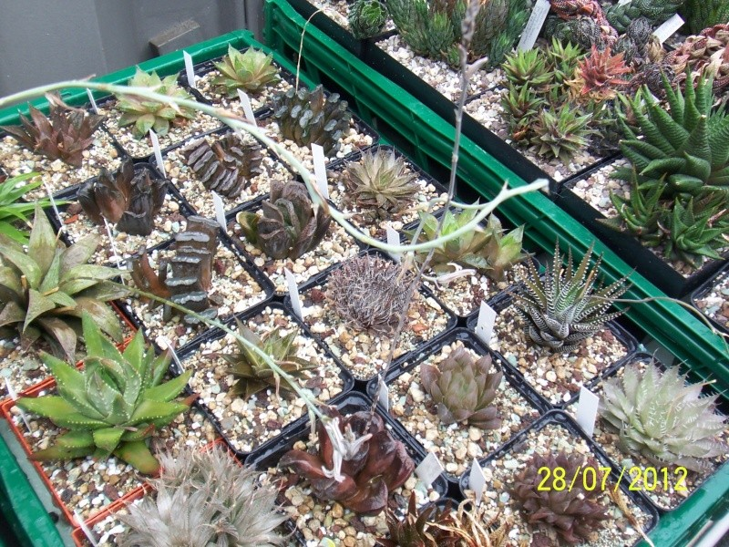 Cacti and Sukkulent in Köln, every day new flowers in the greenhouse Part 17   Bild_394