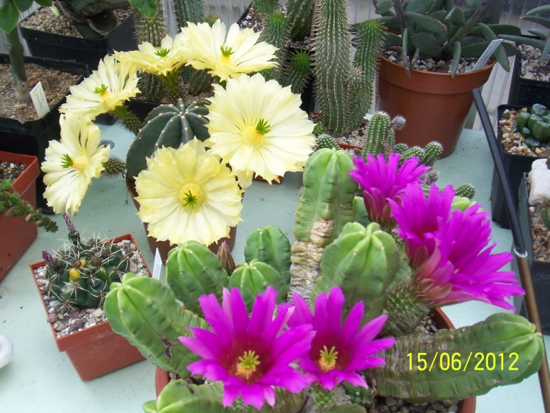 Cacti and Sukkulent in Köln, every day new flowers in the greenhouse Part 22 Year in Review Bild_406