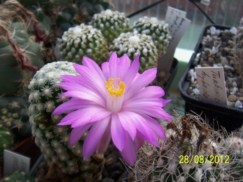 Cacti and Sukkulent in Köln, every day new flowers in the greenhouse Part 22 Year in Review Bild_435