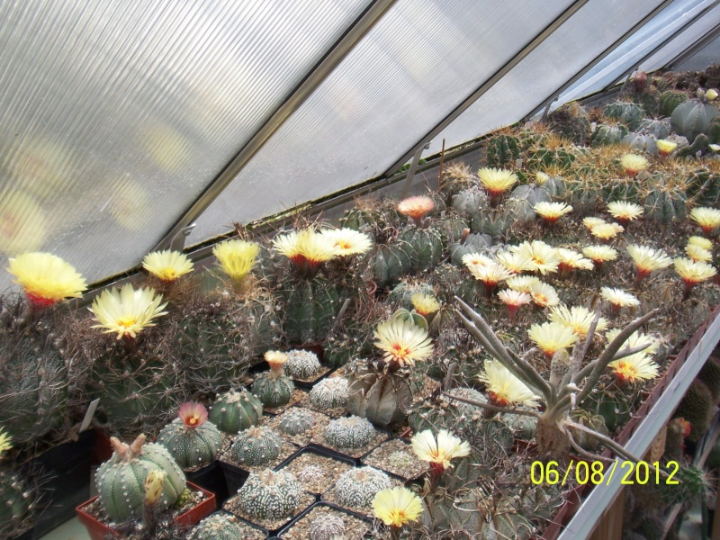 Cacti and Sukkulent in Köln, every day new flowers in the greenhouse Part 23  Bild_487
