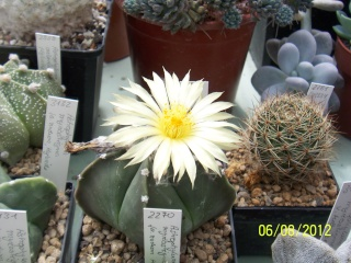 Cacti and Sukkulent in Köln, every day new flowers in the greenhouse Part 23  Bild_517