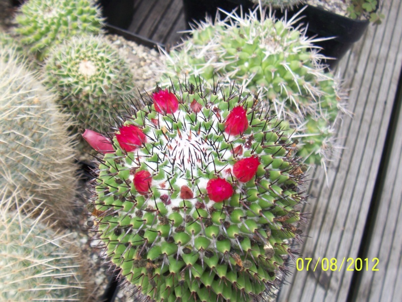 Cacti and Sukkulent in Köln, every day new flowers in the greenhouse Part 24   Bild_542