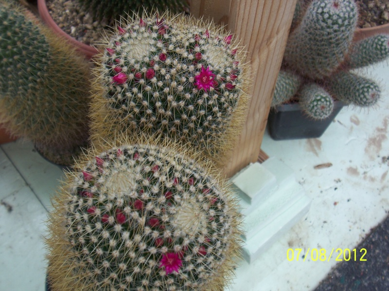 Cacti and Sukkulent in Köln, every day new flowers in the greenhouse Part 24   Bild_544