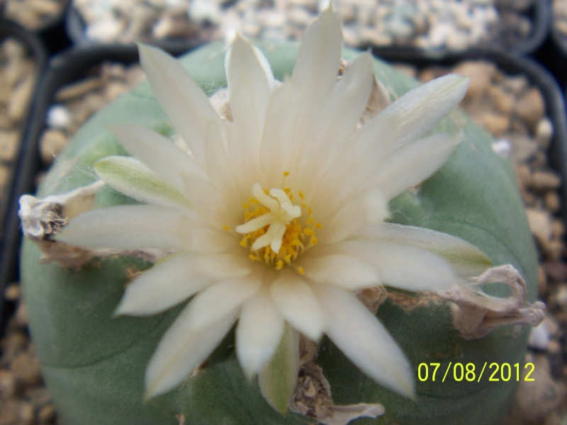 Cacti and Sukkulent in Köln, every day new flowers in the greenhouse Part 24   Bild_554