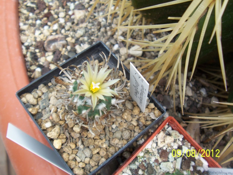 Cacti and Sukkulent in Köln, every day new flowers in the greenhouse Part 26  Bild_629