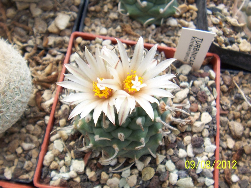 Cacti and Sukkulent in Köln, every day new flowers in the greenhouse Part 26  Bild_634
