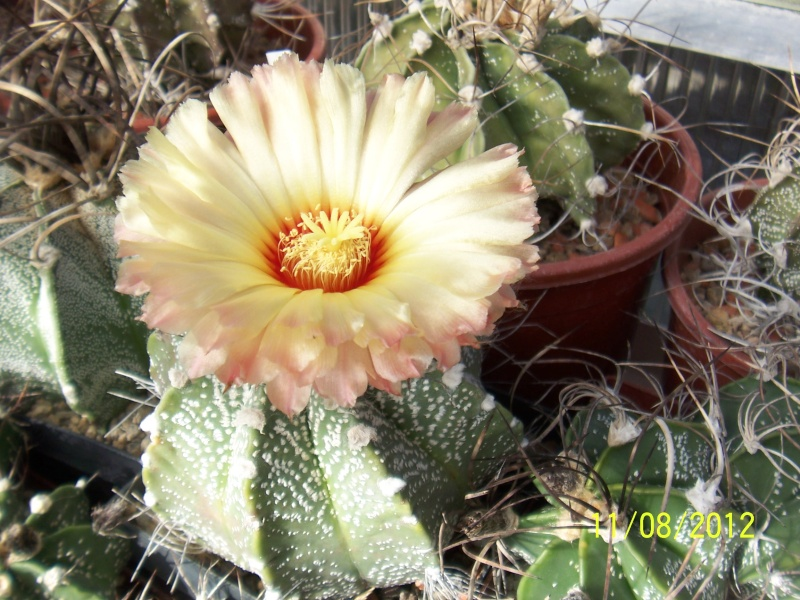 Cacti and Sukkulent in Köln, every day new flowers in the greenhouse Part 26  Bild_690