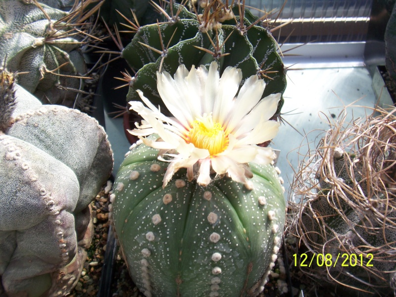 Cacti and Sukkulent in Köln, every day new flowers in the greenhouse Part 26  Bild_695
