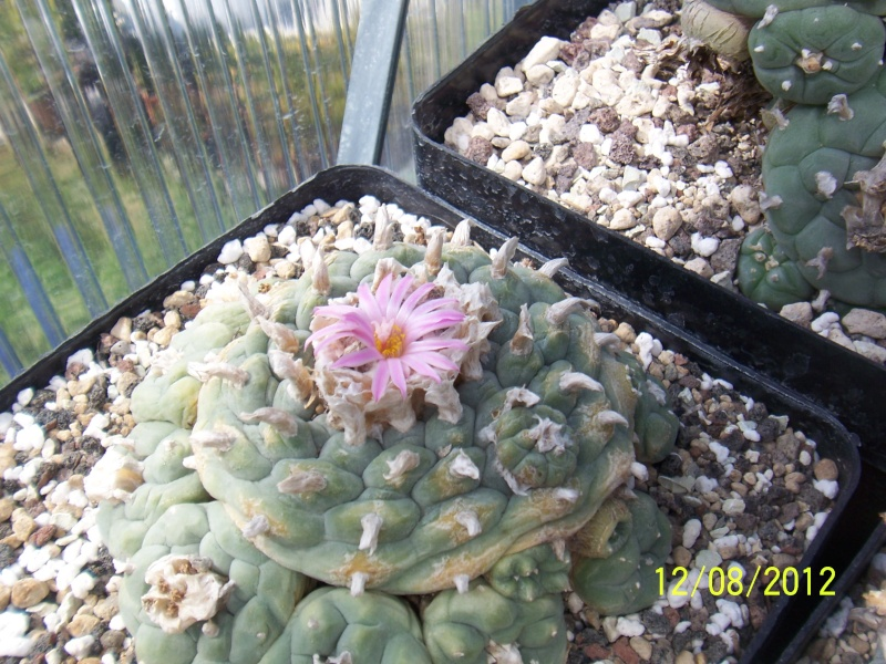 Cacti and Sukkulent in Köln, every day new flowers in the greenhouse Part 26  Bild_697