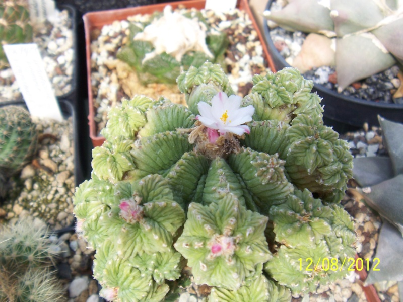 Cacti and Sukkulent in Köln, every day new flowers in the greenhouse Part 26  Bild_702