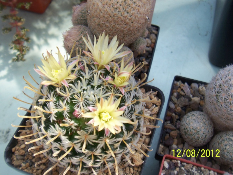 Cacti and Sukkulent in Köln, every day new flowers in the greenhouse Part 26  Bild_704