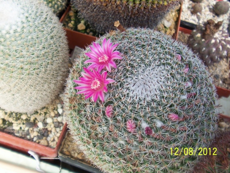 Cacti and Sukkulent in Köln, every day new flowers in the greenhouse Part 26  Bild_706