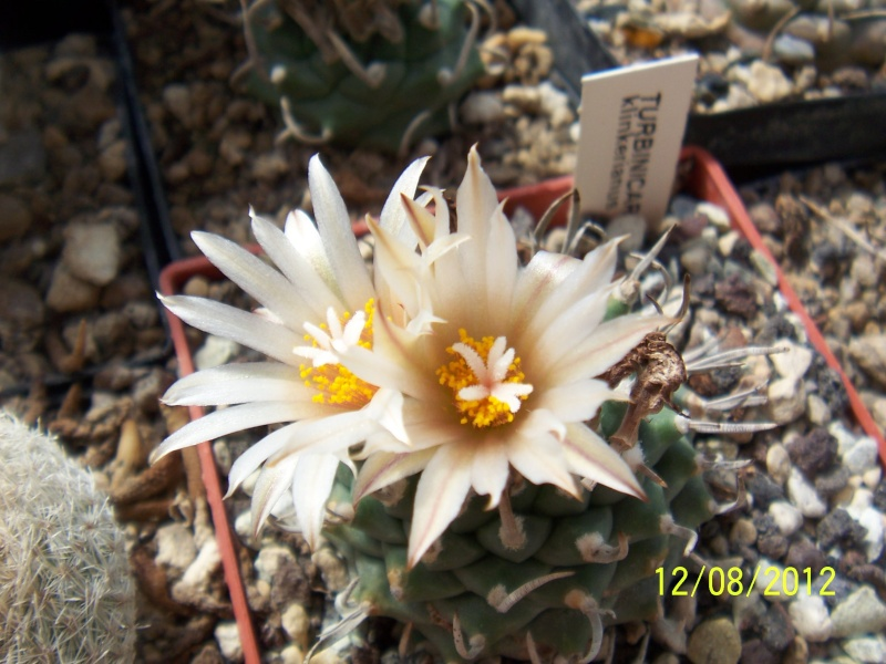 Cacti and Sukkulent in Köln, every day new flowers in the greenhouse Part 26  Bild_707