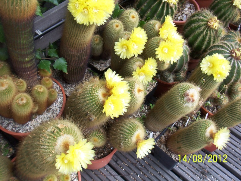 Cacti and Sukkulent in Köln, every day new flowers in the greenhouse Part 27   Bild_722
