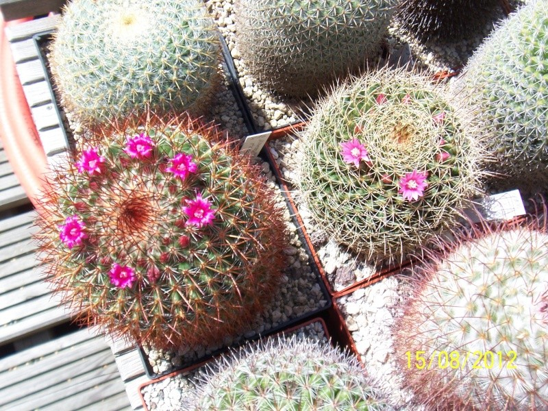 Cacti and Sukkulent in Köln, every day new flowers in the greenhouse Part 27   Bild_743
