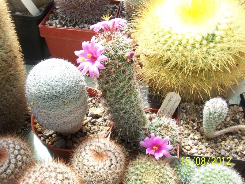 Cacti and Sukkulent in Köln, every day new flowers in the greenhouse Part 27   Bild_748