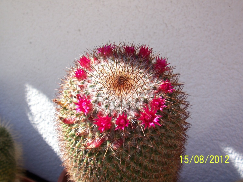 Cacti and Sukkulent in Köln, every day new flowers in the greenhouse Part 27   Bild_751