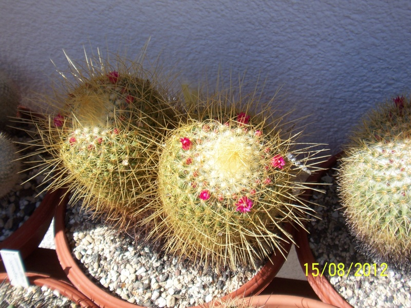 Cacti and Sukkulent in Köln, every day new flowers in the greenhouse Part 27   Bild_753