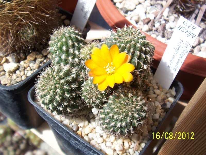Cacti and Sukkulent in Köln, every day new flowers in the greenhouse Part 28   Bild_769
