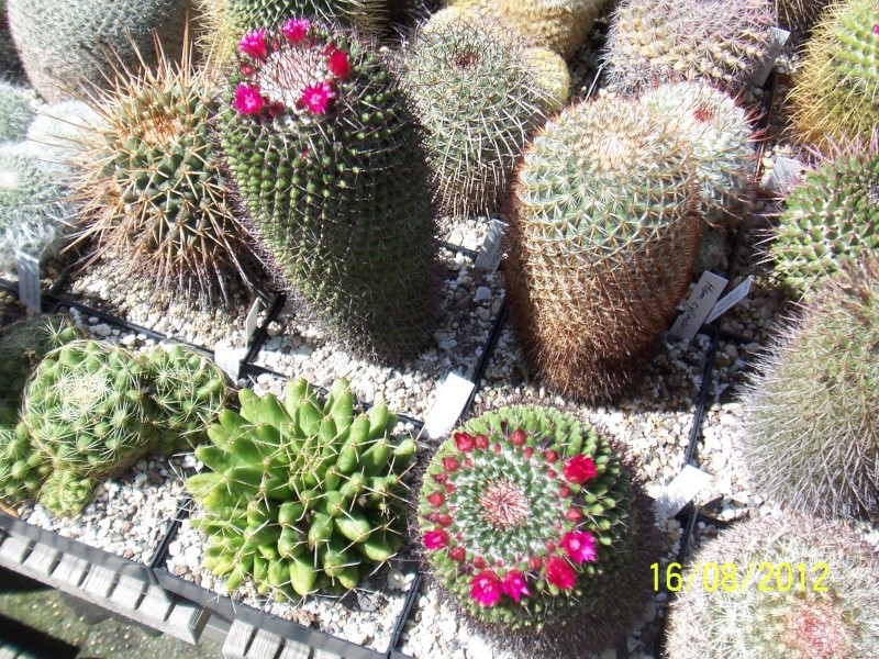 Cacti and Sukkulent in Köln, every day new flowers in the greenhouse Part 28   Bild_777