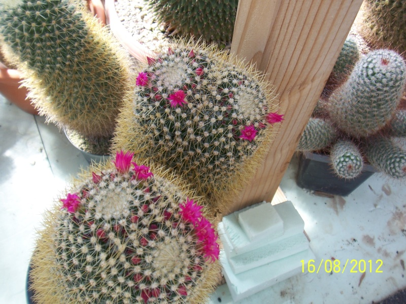 Cacti and Sukkulent in Köln, every day new flowers in the greenhouse Part 28   Bild_779