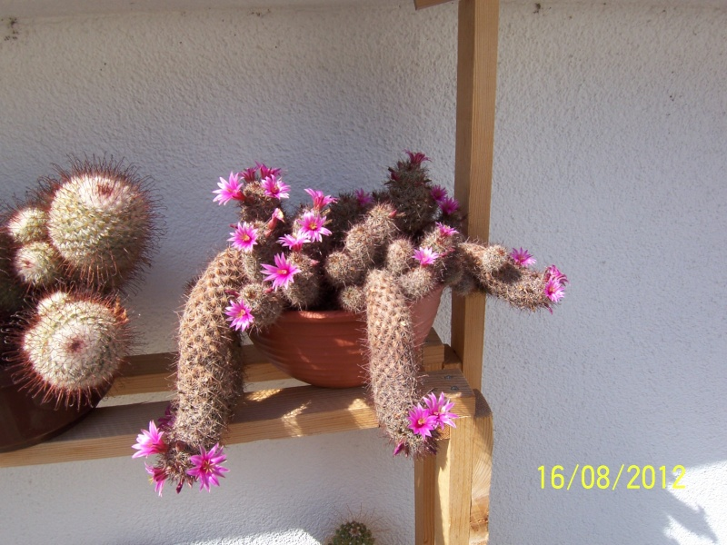 Cacti and Sukkulent in Köln, every day new flowers in the greenhouse Part 28   Bild_780