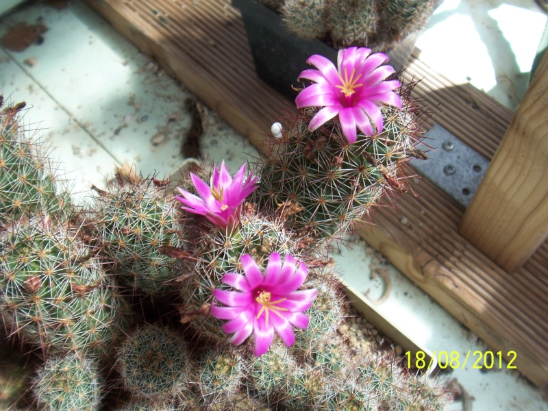 Cacti and Sukkulent in Köln, every day new flowers in the greenhouse Part 28   Bild_792