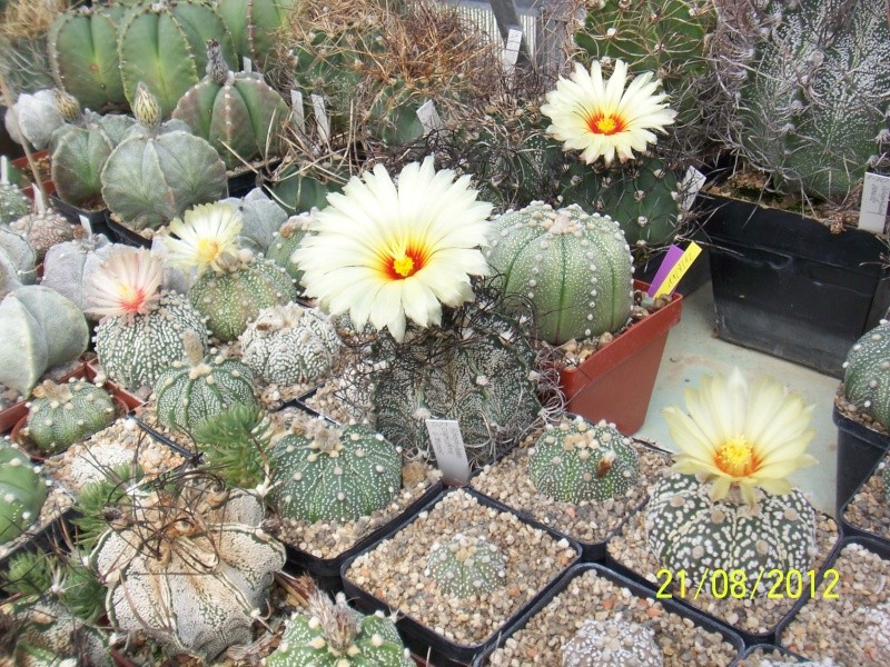 Cacti and Sukkulent in Köln, every day new flowers in the greenhouse Part 29   Bild_849