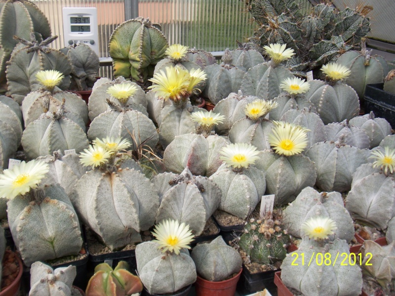 Cacti and Sukkulent in Köln, every day new flowers in the greenhouse Part 29   Bild_851
