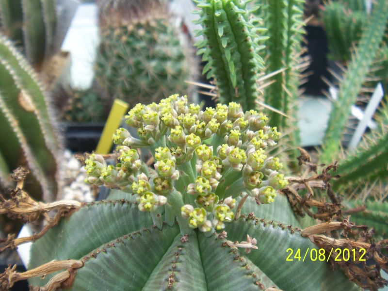 Cacti and Sukkulent in Köln, every day new flowers in the greenhouse Part 30   Bild_931